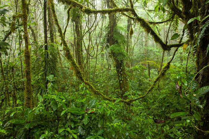 Santa Elena Cloud Forest Reserve, Costa Rica