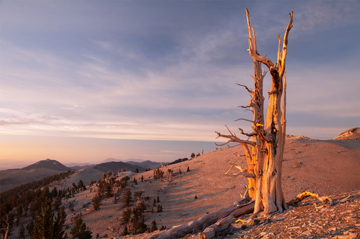 Inyo National Forest, CA, USA